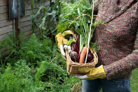 GAP – Gleaning Abundance Program