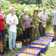 Gleaning Abundance 2017, GAP
