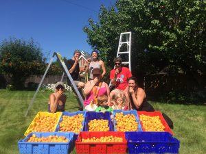 GAP Harvest
