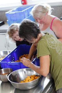 sorting-apricots